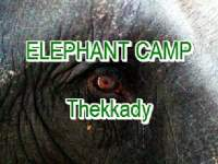Das Elephant Camp in Thekkady